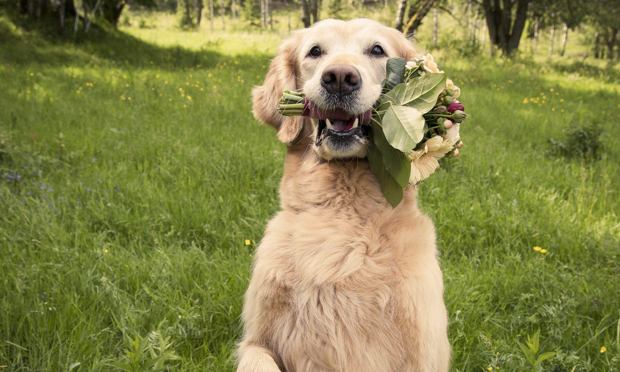 Blomsterhundar